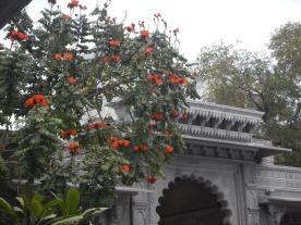 dans-les-rues-udaipur-inde-7